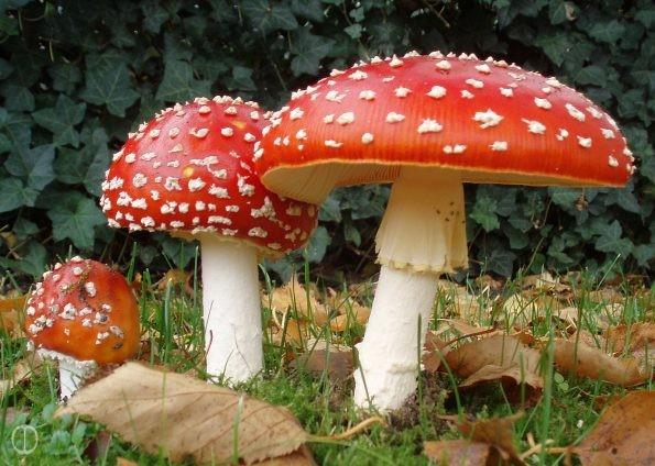 tuindagen-Beervelde-fungi-test