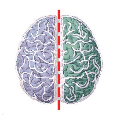 verdeeld-brein-natuur-belangrijk